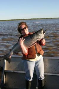 Yukon salmon